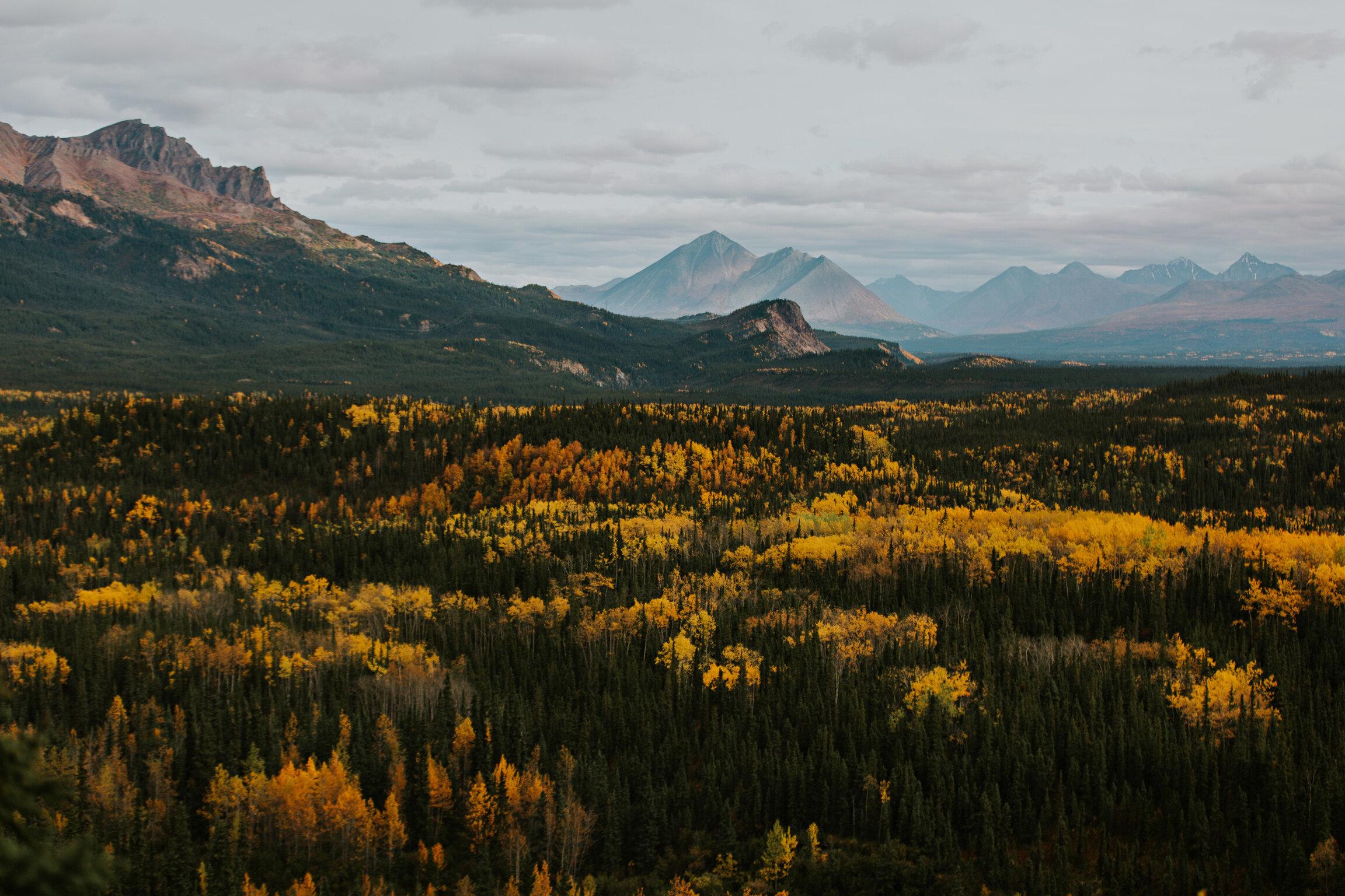 CindyGiovagnoli_Denali_Nation_Park_Alaska_autumn_fall_camping_outdoors-002.jpg