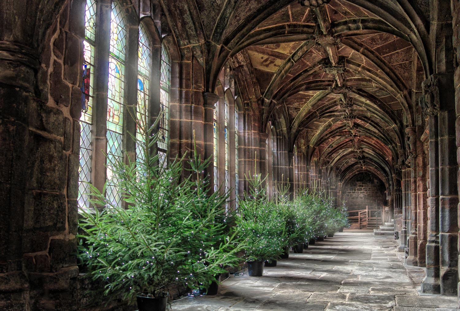 53 - Christmas trees in Chester Cathedral.jpg