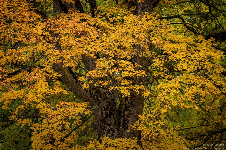 Fall in Morga.jpg
