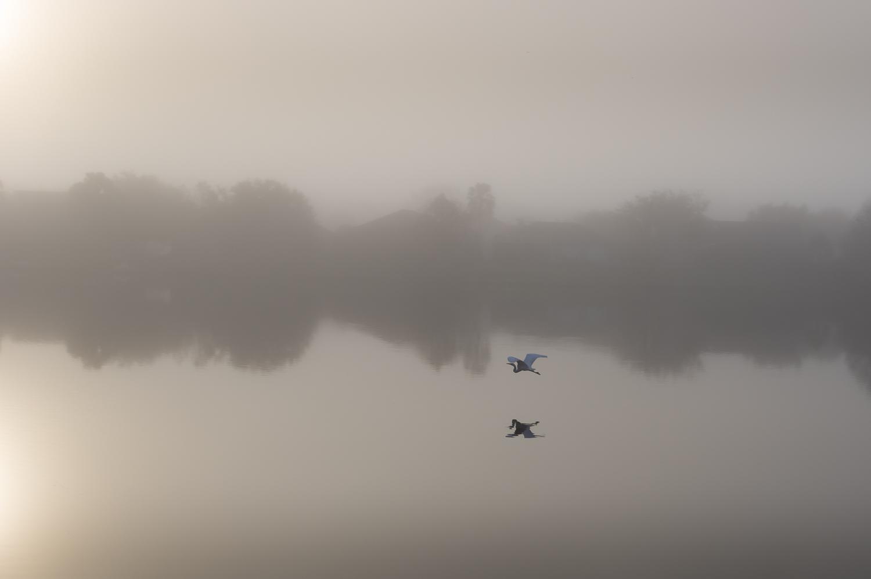 9 - Bird in Flight.jpg
