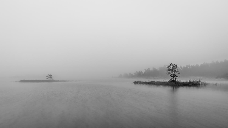 12 - Fog.jpg