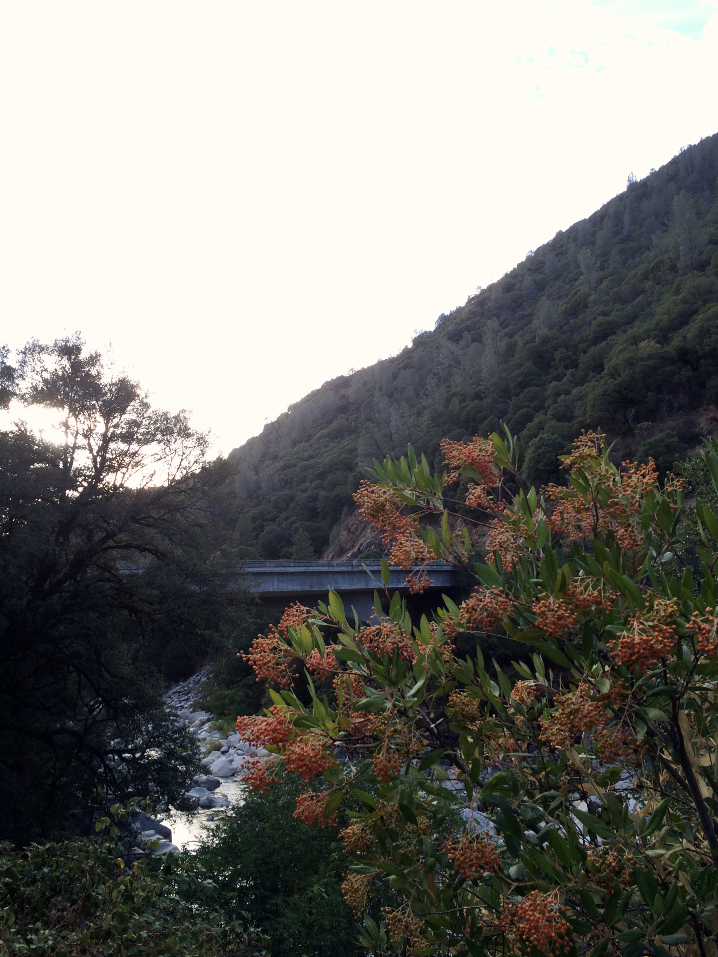 """Toyon--the """"holly"""" of Hollywood"""