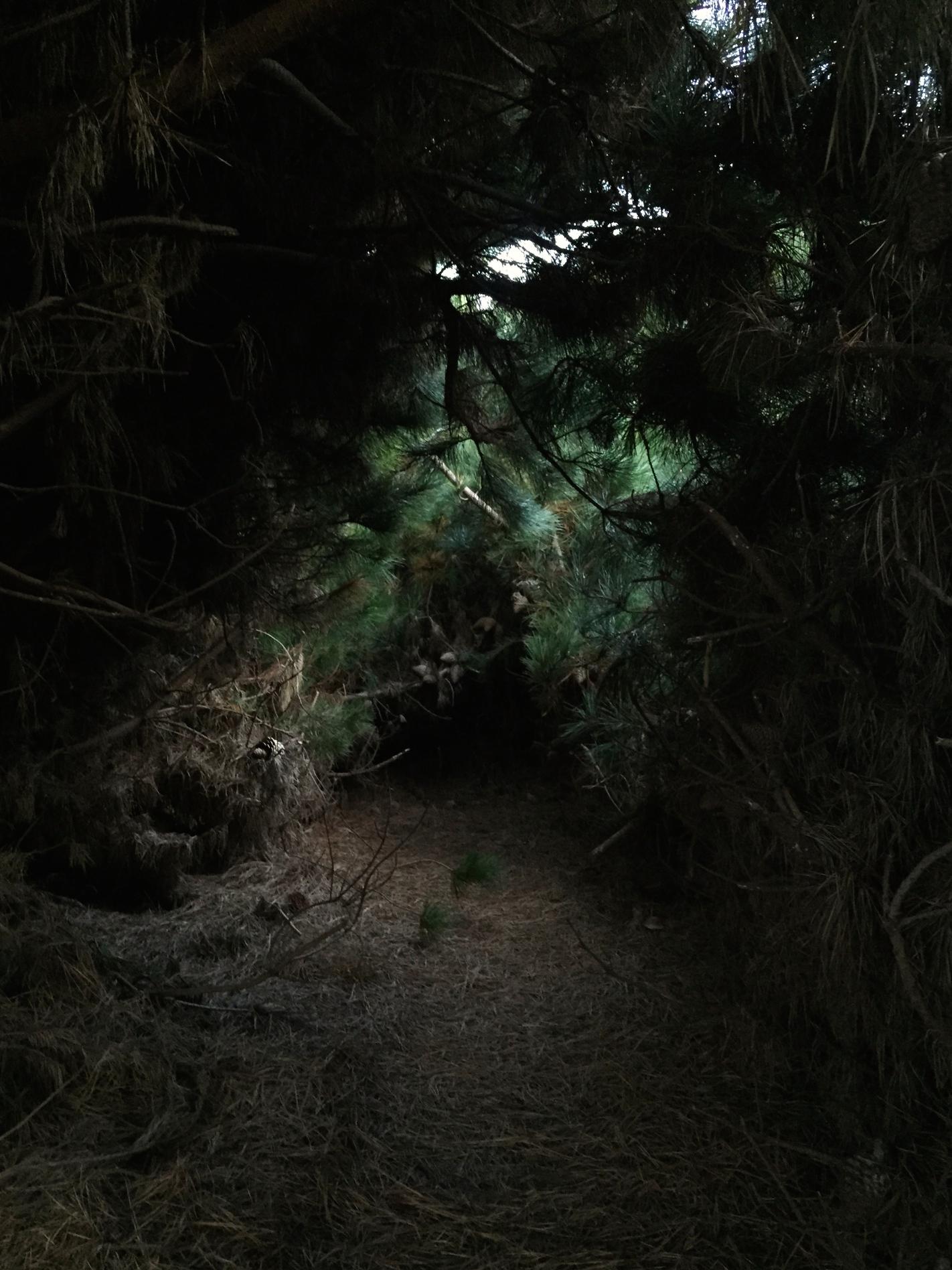Through the fairy-tale tunnel