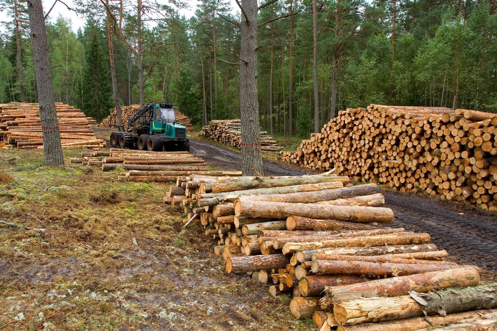 Deforestaciones masivas utilizada por muchas industrias que reduce la absorción del CO2