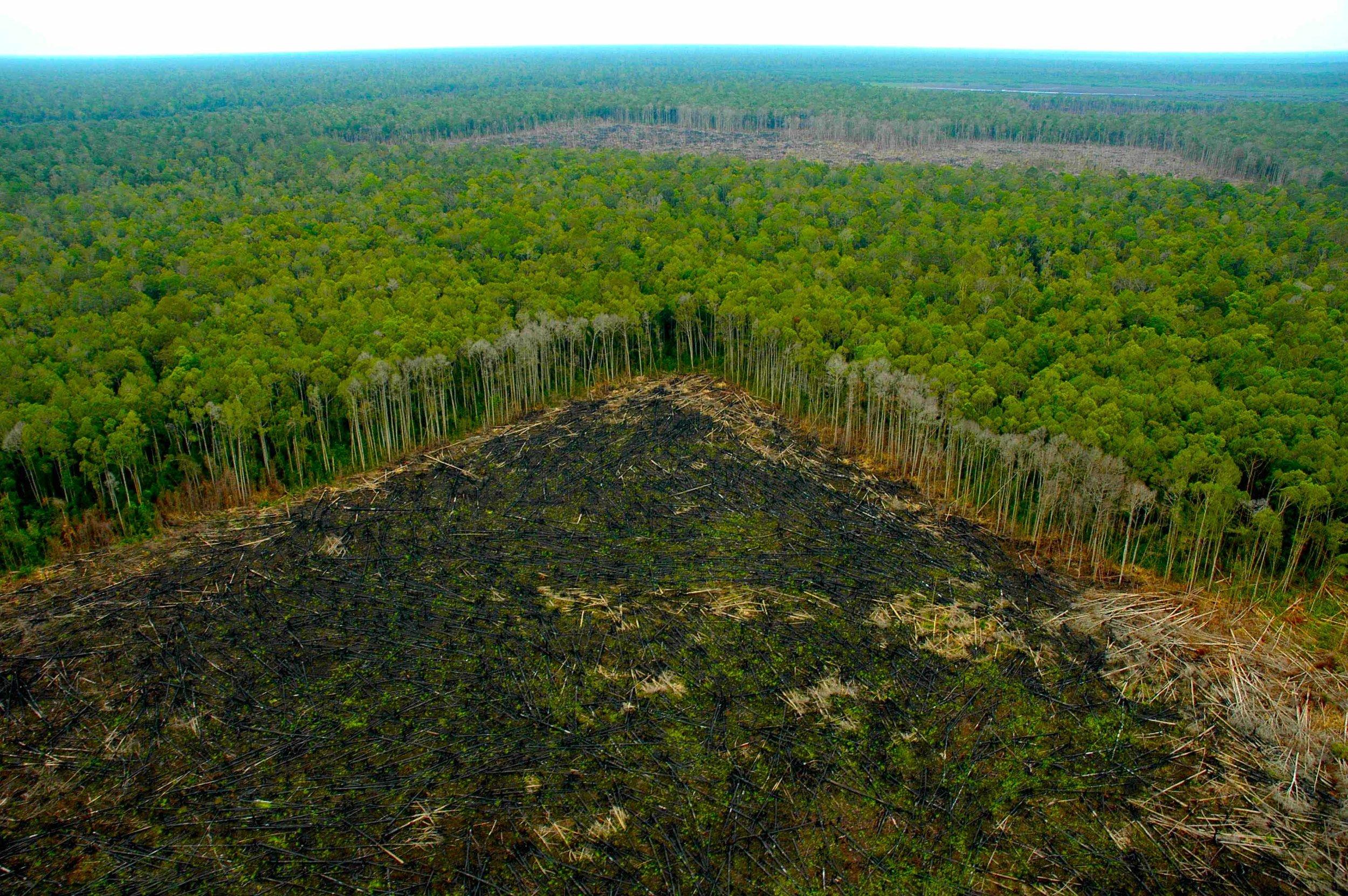 #5 deforestacion.jpg