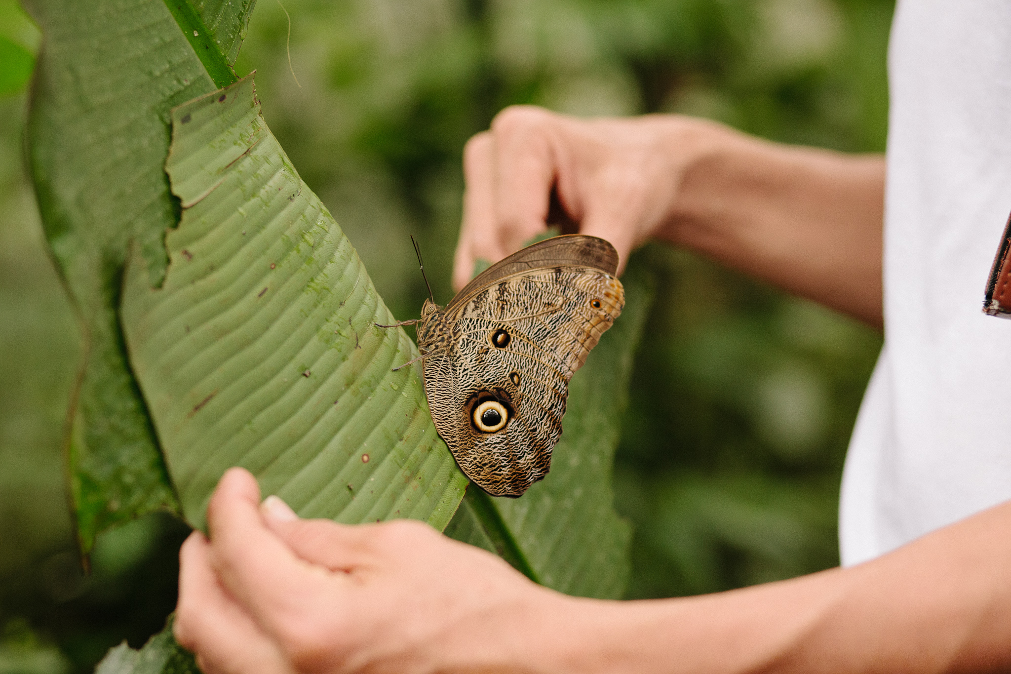 EcuadorQuito&Amazon_forwebsite2015_Jan2010_jenniferleahy-044.jpg