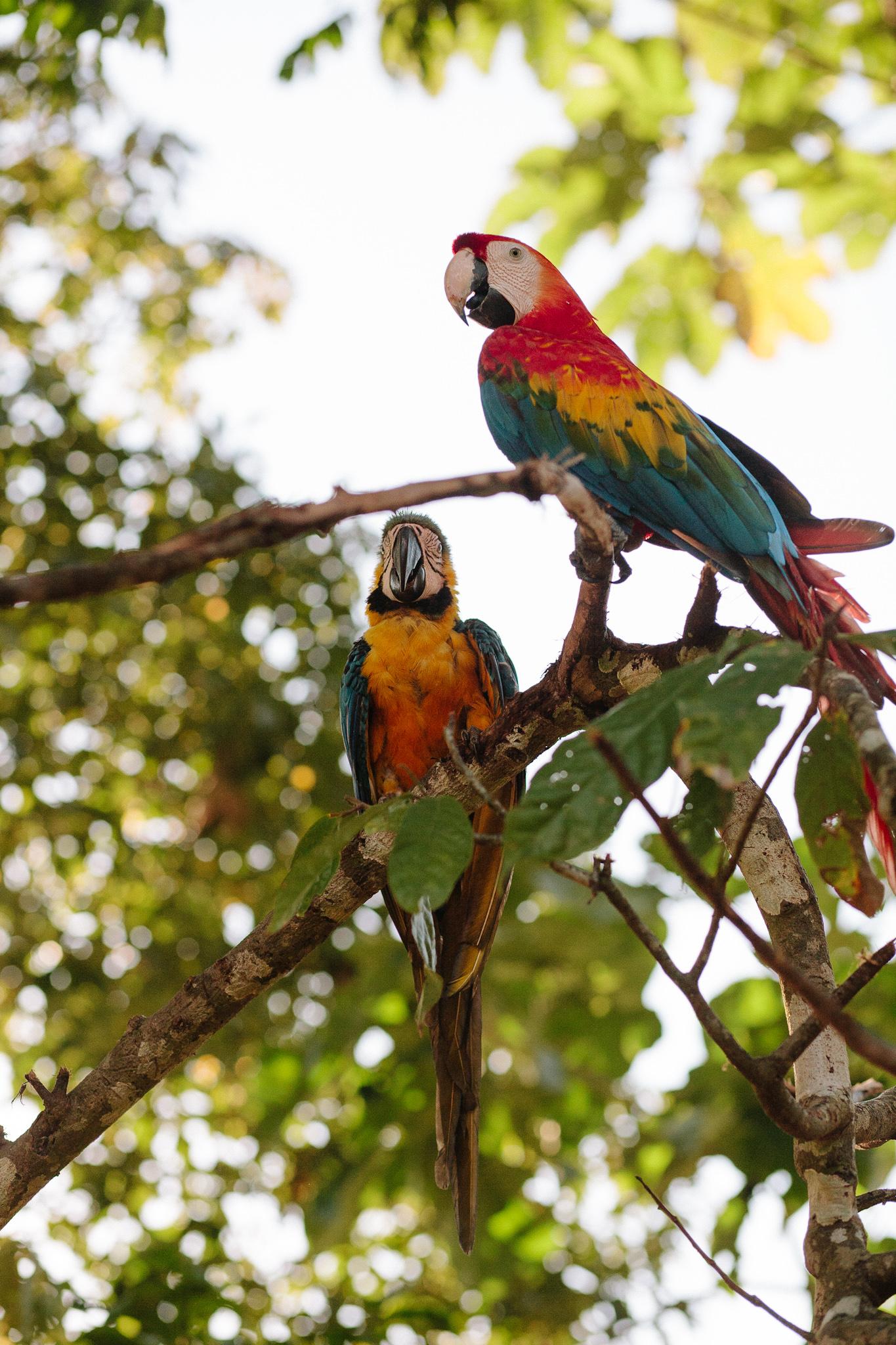 EcuadorQuito&Amazon_forwebsite2015_Jan2010_jenniferleahy-052.jpg