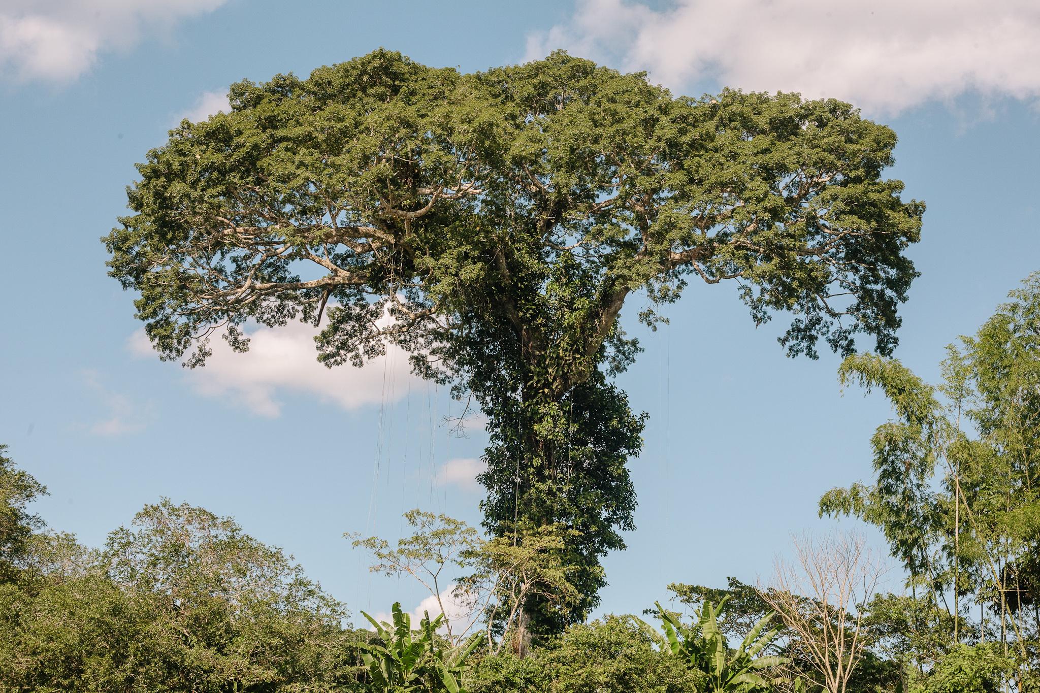 EcuadorQuito&Amazon_forwebsite2015_Jan2010_jenniferleahy-061.jpg