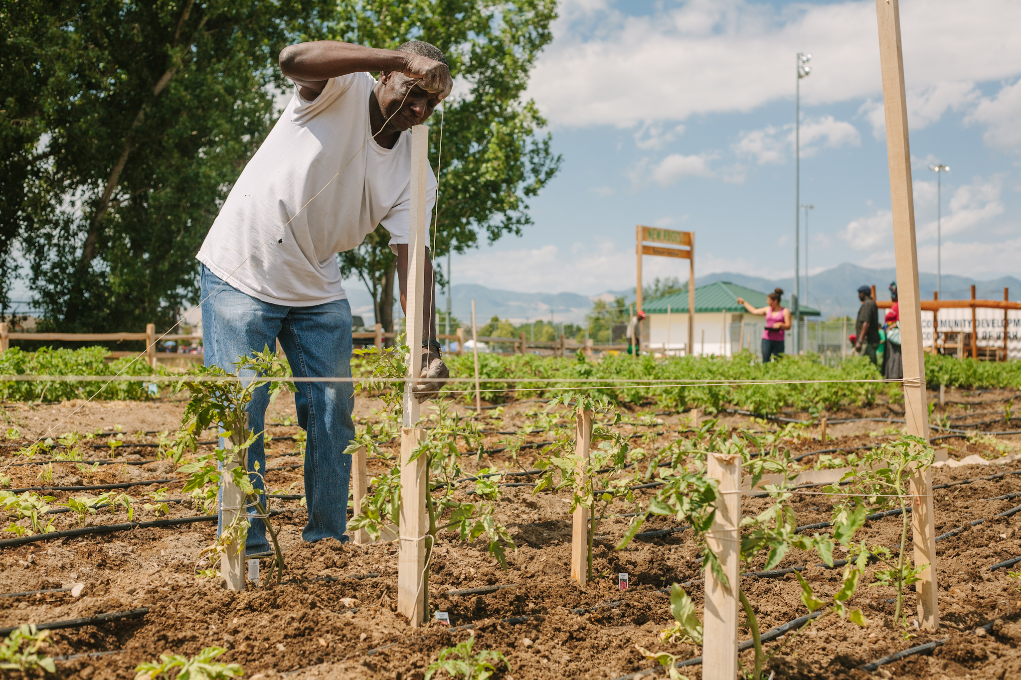 The IRC's   New Roots program works with Salt Lake City refugee communities   to increase food access and provide technical   training. Participants operate a small-scale urban farm, supplying numerous local restaurants and farm stands with produce.