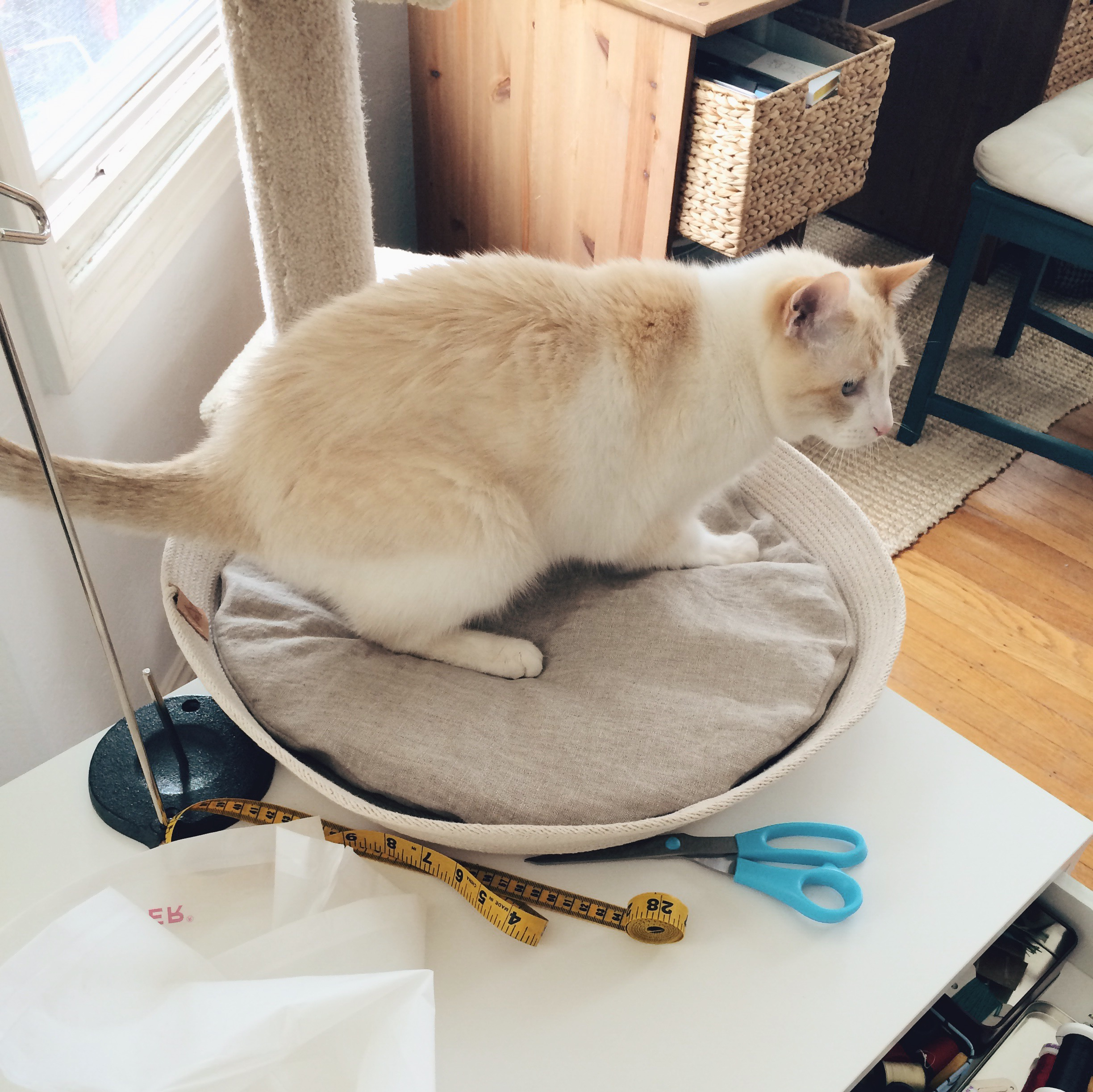 Bollini begins with an impromotu test. Hedoesn't even wait for the bed to be placed on the floor, as he believesa good cat bed should be suitable to sleep in anywhere.