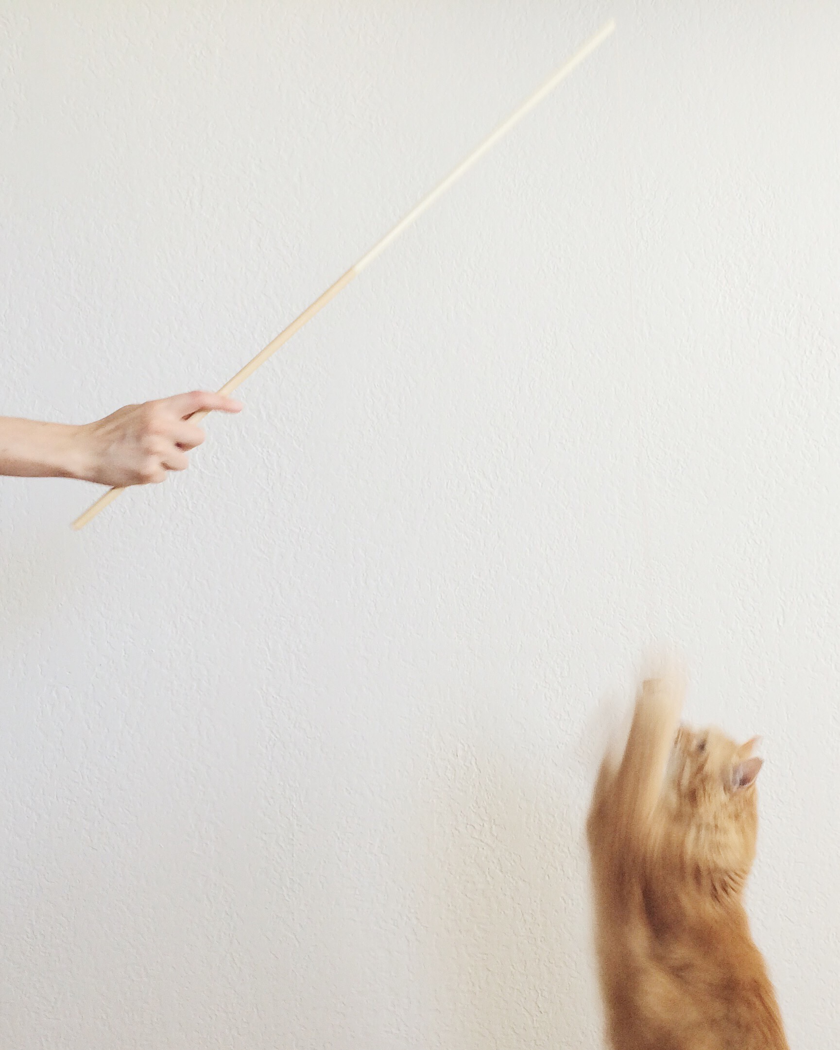 Behind the Design of the Fishing Rod Cat Toy