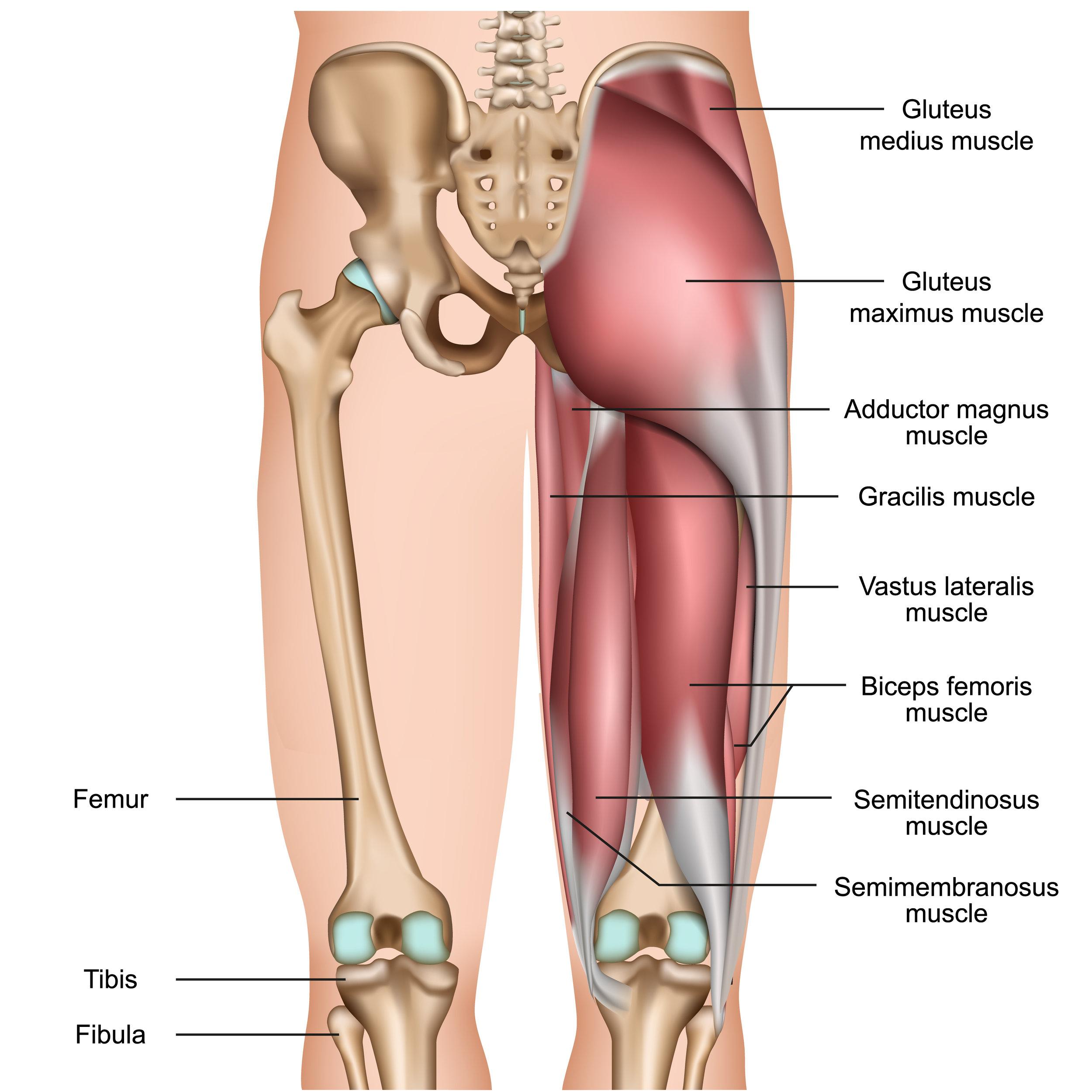 hamstring-injury-rehab-utah-sports-chiropractor.jpg