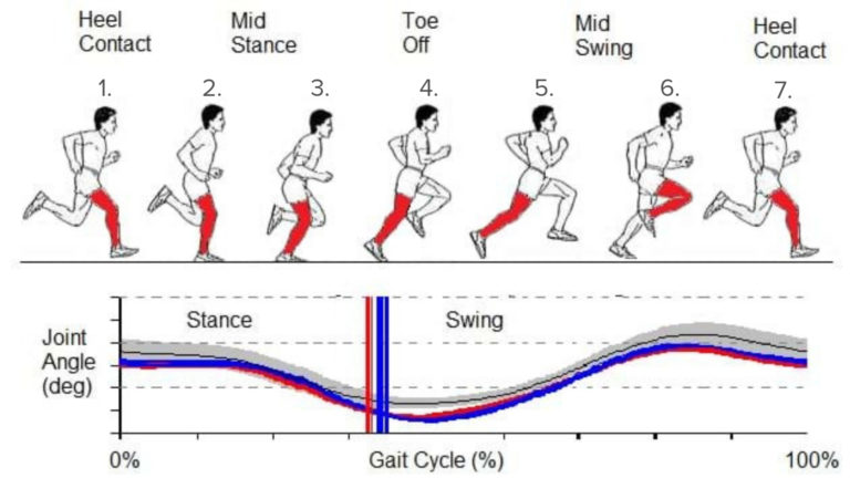 For a great review of the gait cycle, check out the  Biomechanic .