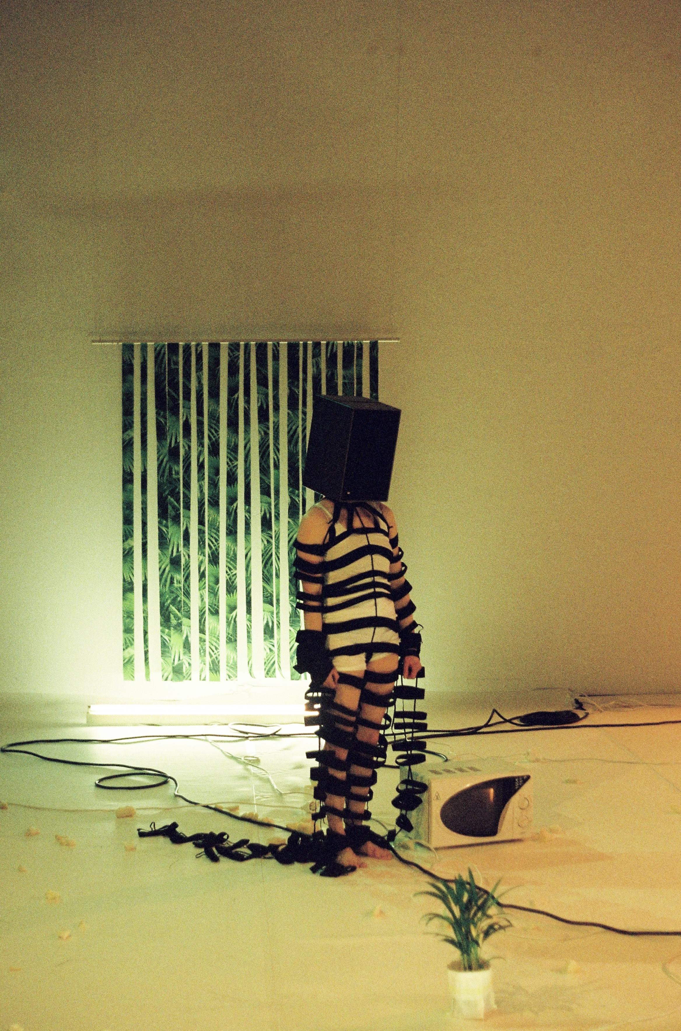 die Wirklichkeit, das Zebra- M. Weniger: Rudi Dubrovnik 29.jpg