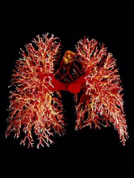 depositphotos_83530194-stock-photo-healthy-lungs.jpg