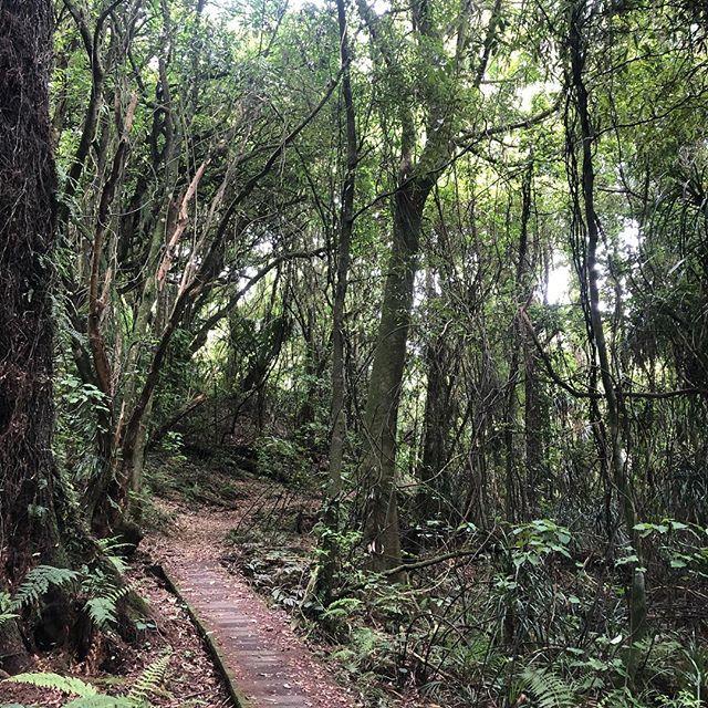 Bush walks New Zealand style... : : : #thebellabloomco #thebeautifulflowercompany #abiafloraldesignerofdreams2017 #abiafloraldesignerofdreams2018 #weddingfloristbrisbane #brisbaneweddingflorist #bushwalknewzealandstyle #floristonholiday #lakerotokare #parataniwha #bushnettle