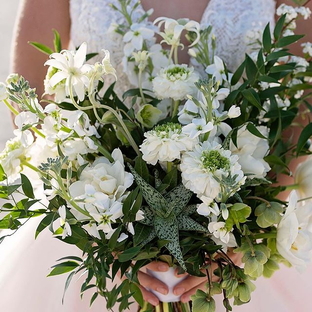 More from our Summer shoot on the Gold Coast! Our signature style is textural and lavish, so for this classic white and green palette we wanted to incorporate loads of interesting elements, from soft and round to smooth and pointy! Think ranunculus, hellebores, stock, flannel flower and even aloe vera. Image @dawnphotography.com.au Jewellery @redki.bridal  Gown @goddessbynature : : : #thebellabloomco #thebeautifulflowercompany #weddingfloristbrisbane #brisbaneweddingflorist #abiafloraldesignerofdreams2018 #abiafloraldesignerofdreams2017 #luxuryweddingsbrisbane #bridalbouquet #weddingbouquet #aloevera #ranunculus #flannelflower #beachbouquet