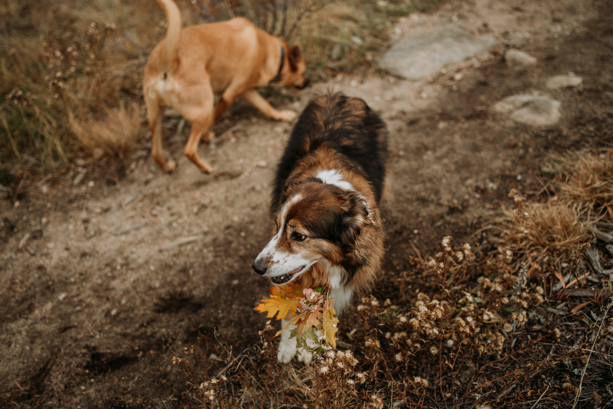 Have your dogs join in your wedding elopement with a special bouquet just for them!