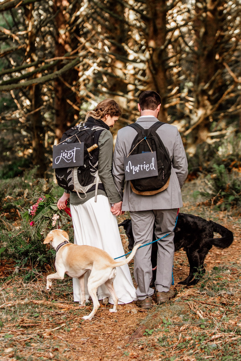 A couple and their dogs on their elopement day.