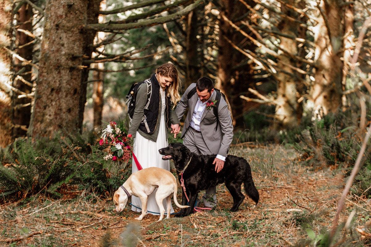 Dogs in weddings.