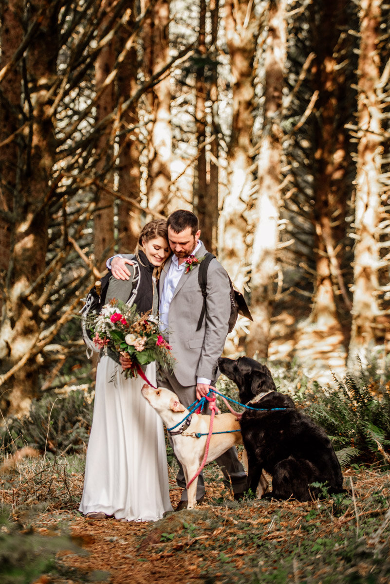 Dogs in weddings and elopements.