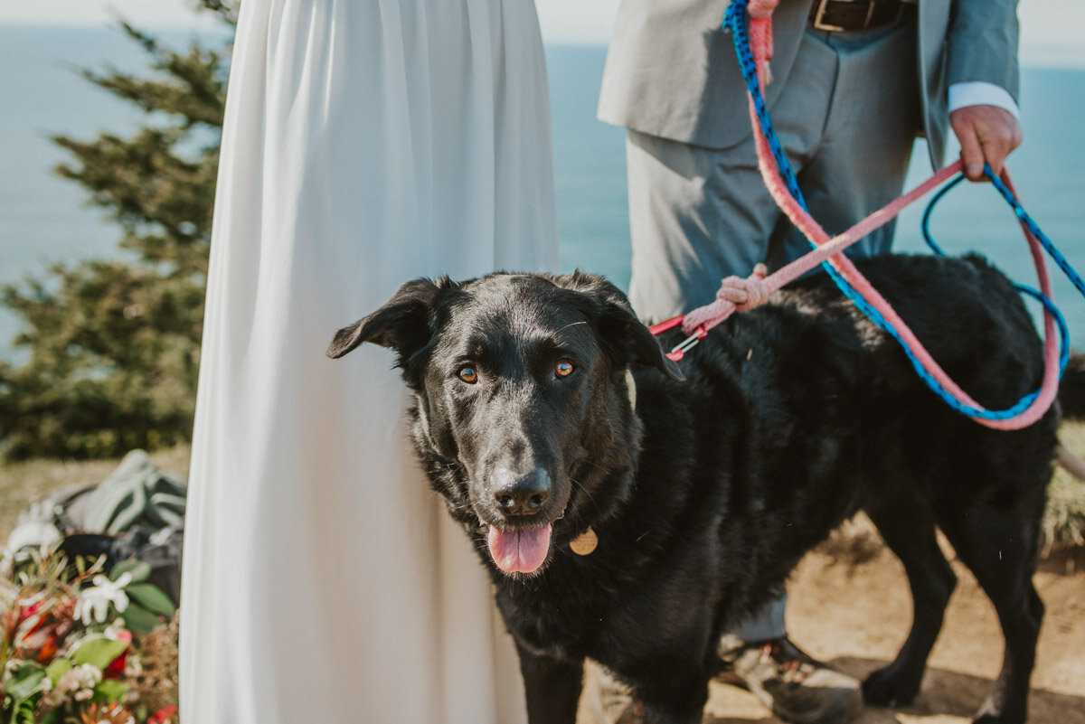 A close up of a black dog included on a hiking elopement.