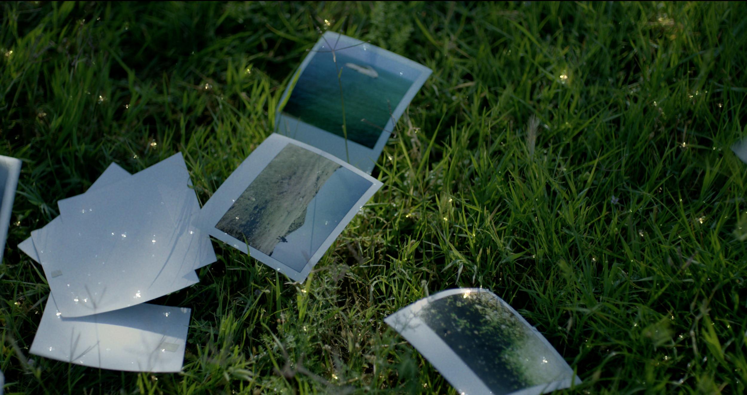 Mira - Meadow Photos