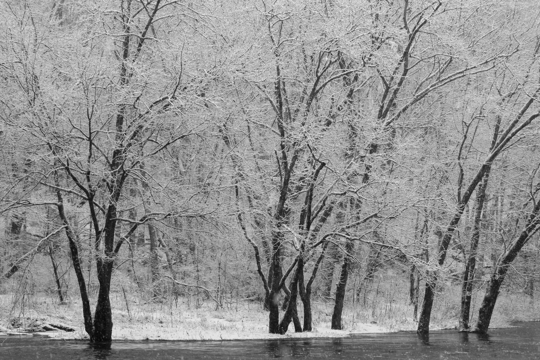 trees with snow.jpg