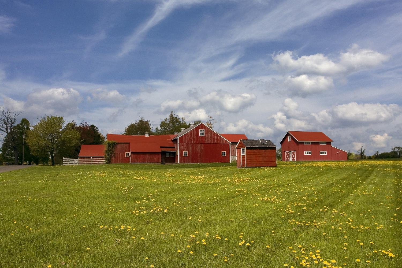 Top Pasture Barns2.jpg