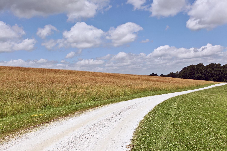 Upland Pasture 18x12.jpg
