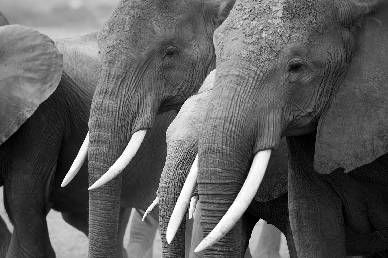 elephants3.jpg