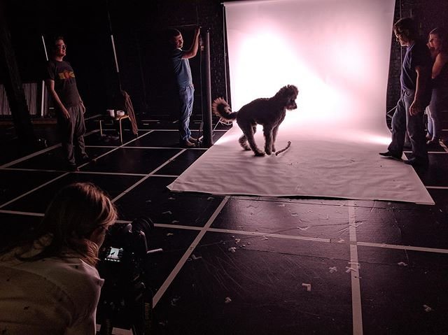 BTS action shots from our video shoot with Bodie, the star of the show 🐾 📸: @mitchell_hoovers  #videodesign #projectiondesign #theater #becauseofwinndixiegoodspeed