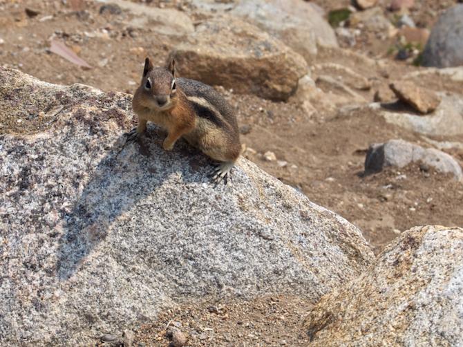 Rockies-Squirrel-Naomi-VanDoren