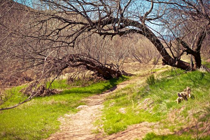Camp-Verde-River-Hot-Springs-Hike-Arizona-Naomi-VanDoren 2