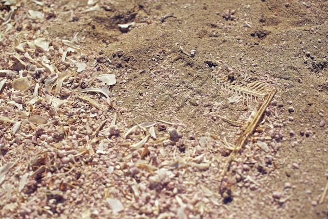 Salton-Sea-California-Naomi-VanDoren 2