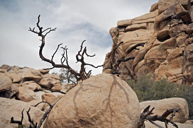 Joshua Tree | NaomiVanDoren.com