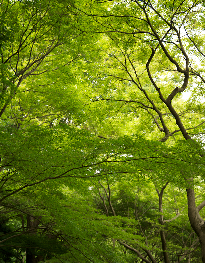 Koishikawa Korakuen Gardens, Tokyo Japan   NaomiVanDoren.com