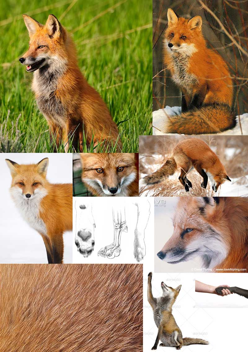 "My references for my ""Fox in a Kimono"" project."