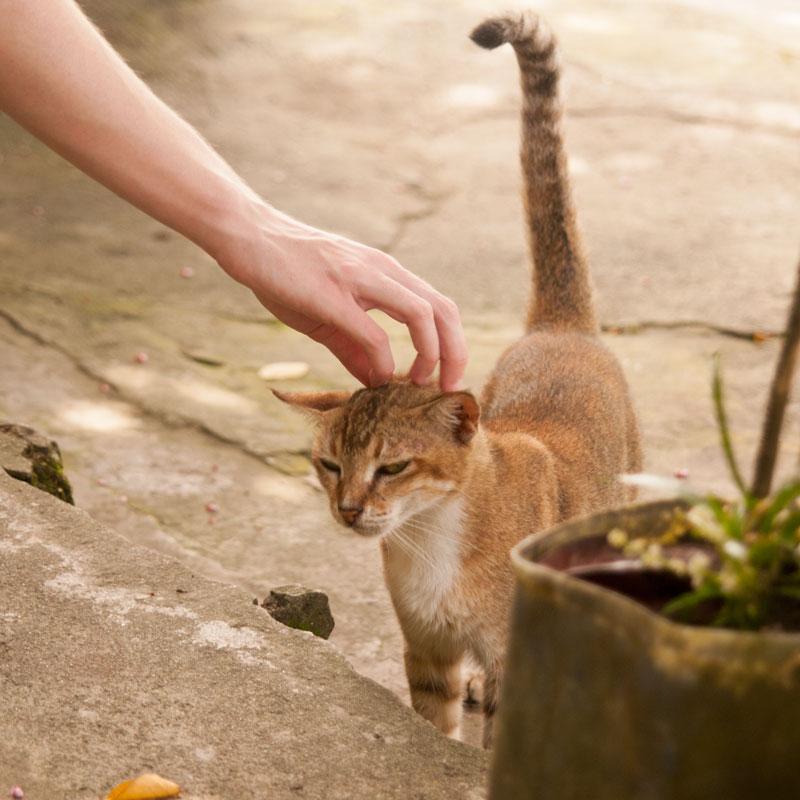 cat-hand-scratching-head-Papua-Indonesia-Naomi-VanDoren