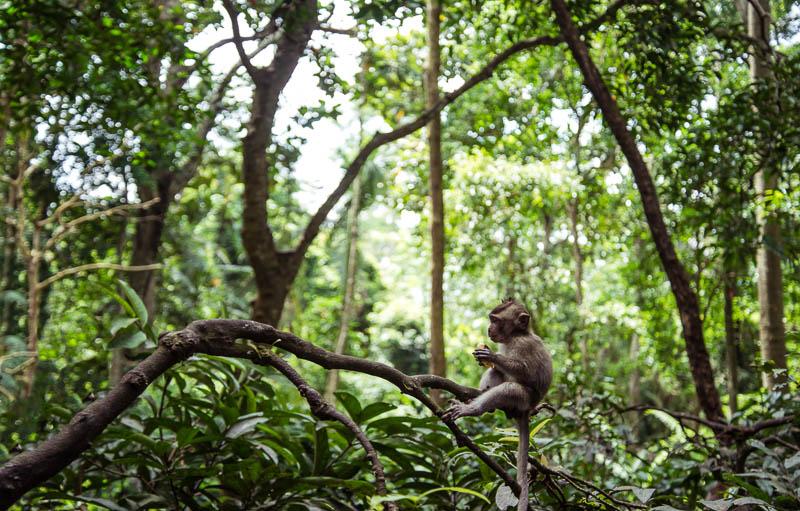 Ubud-Moneky-Park-Indonesia-Naomi-VanDoren-13.jpg