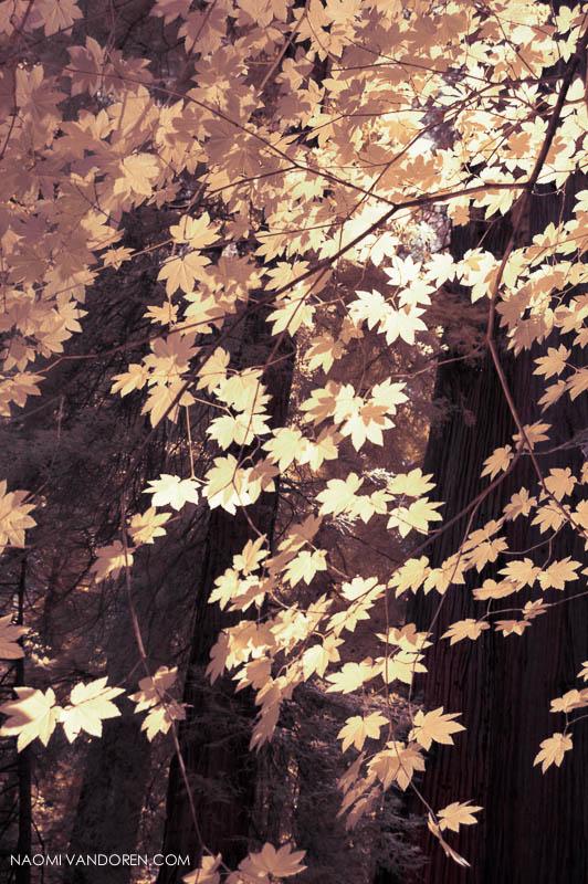 Gold-Leaf-naomi-vandoren-800.jpg