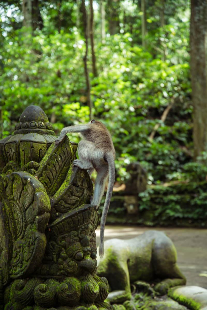 Ubud Moneky Park Indonesia Naomi VanDoren-6.jpg