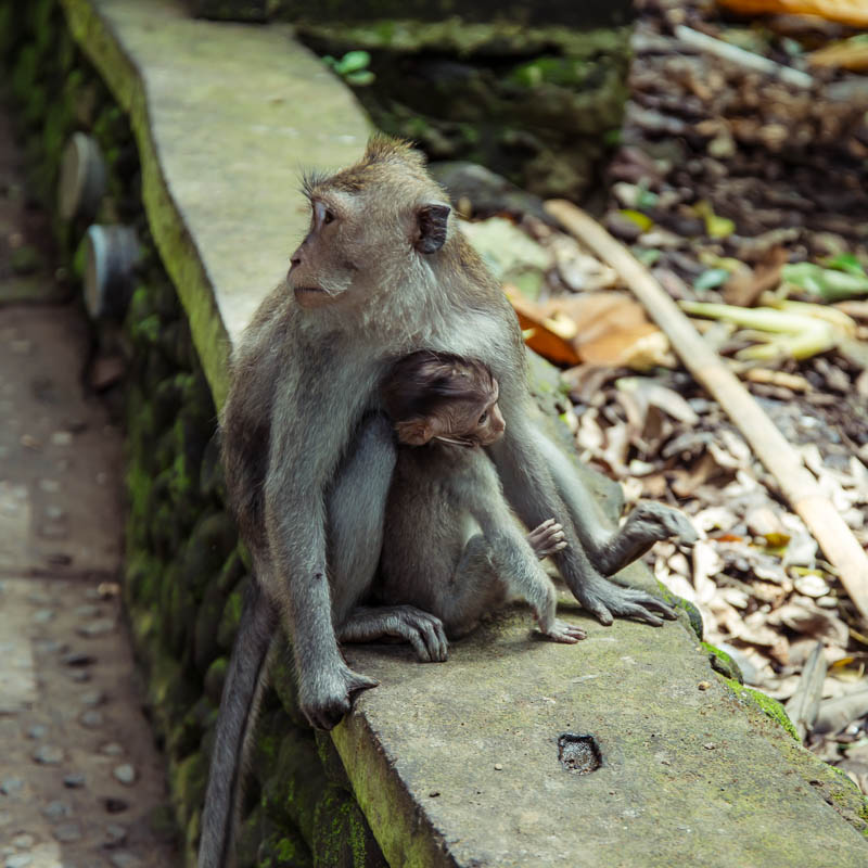 Ubud Moneky Park Indonesia Naomi VanDoren-8.jpg
