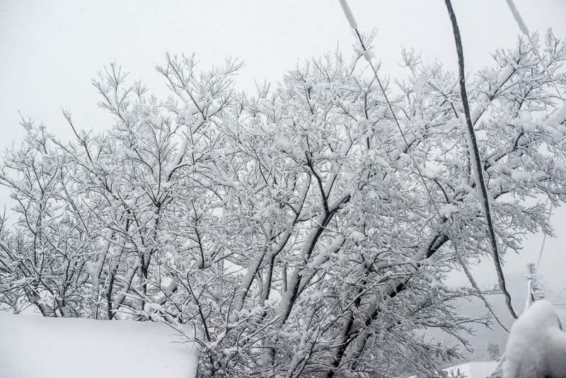 Snow Day Japan Naomi VanDoren-18.jpg