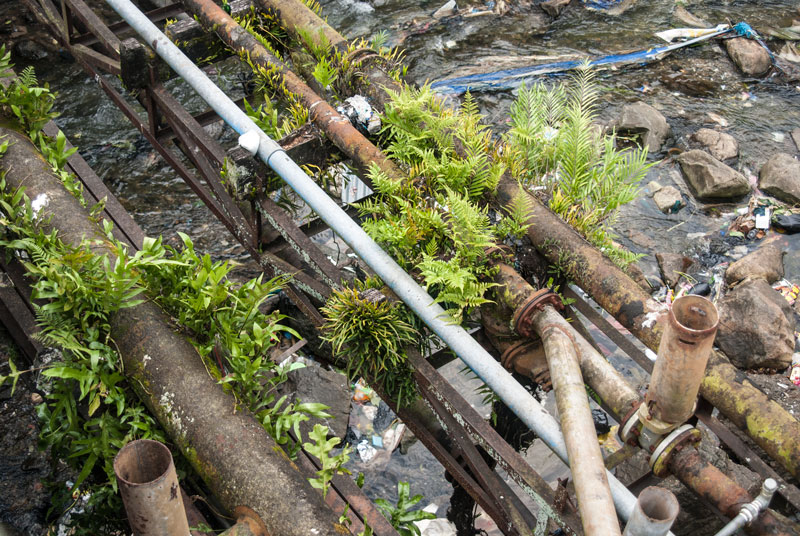 pipes-with-ferns-growing-on-them-Papua-Indonesia-Naomi-VanDoren.jpg