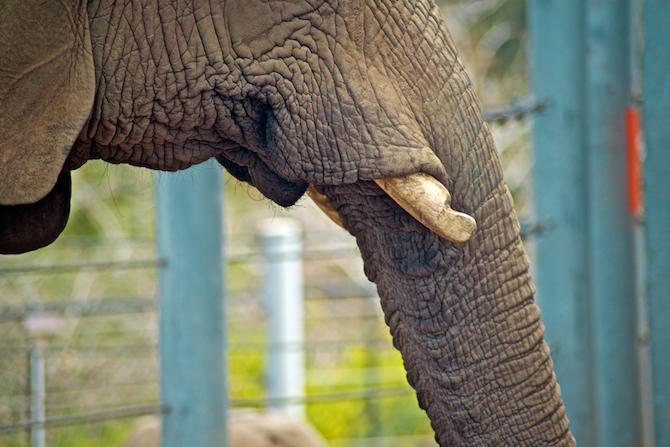 San-Diego-Zoo-CA-Naomi-VanDoren 27.jpg