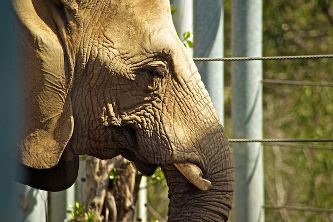 San-Diego-Zoo-CA-Naomi-VanDoren 25.jpg