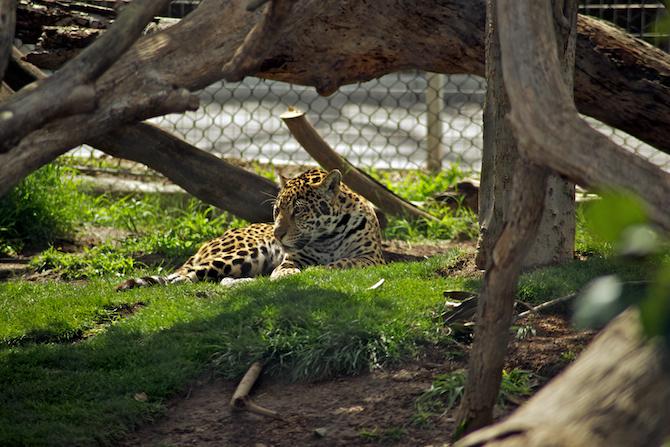 San-Diego-Zoo-CA-Naomi-VanDoren 28.jpg