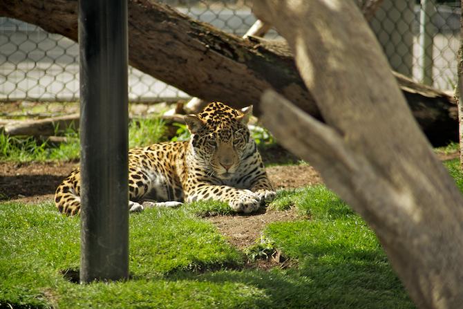 San-Diego-Zoo-CA-Naomi-VanDoren 31.jpg