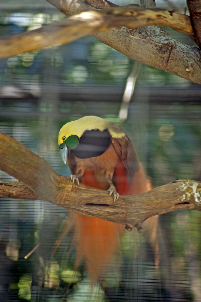 San-Diego-Zoo-CA-Naomi-VanDoren 12.jpg